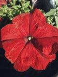 Rode bloemen stock afbeelding
