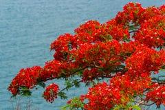 Rode bloemen in aard Stock Afbeeldingen