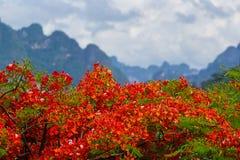 Rode bloemen in aard Royalty-vrije Stock Foto