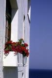 Rode bloemen bij het venster Royalty-vrije Stock Afbeeldingen