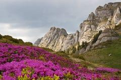 Rode bloemen in de berg Stock Fotografie