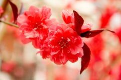 Rode bloemen in de lente royalty-vrije stock fotografie