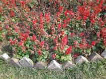 Rode bloemen in de tuin stock foto