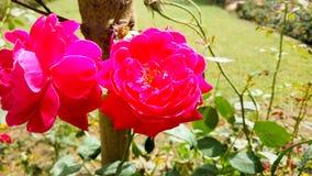 Rode bloemen die aardfoto verbazen stock foto