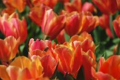 Rode bloemen en bij Stock Afbeeldingen