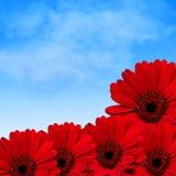 Rode bloemen en de zomerhemel Royalty-vrije Stock Afbeeldingen