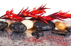 Rode bloemen en zwarte stenen Stock Fotografie
