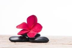 Rode bloemen Frangipani Royalty-vrije Stock Afbeelding