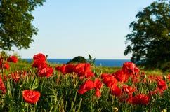 Rode bloemen, groen gras royalty-vrije stock afbeeldingen