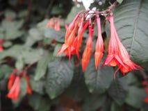 Rode bloemen op een boomachtergrond Royalty-vrije Stock Afbeelding