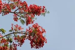 Rode bloemen op een witte achtergrond Stock Afbeeldingen