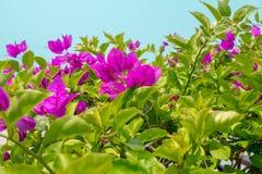 Rode bloemen op struiken tegen hemel stock foto