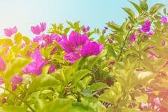 Rode bloemen op struiken tegen hemel royalty-vrije stock fotografie