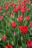 Rode bloemen in Pasen Royalty-vrije Stock Afbeeldingen
