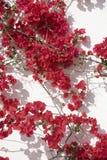 Rode bloemen tegen muur Stock Foto