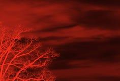 Rode bloemenachtergrond royalty-vrije illustratie