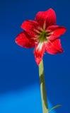 Rode bloemenachtergrond in Surat Thani Thailand Royalty-vrije Stock Afbeeldingen