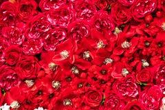 Rode bloemenachtergronden Stock Afbeeldingen