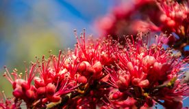 Rode bloemenbos Stock Foto's