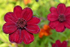 Rode bloemtuin Royalty-vrije Stock Foto