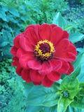 Rode bloemtuin Royalty-vrije Stock Afbeelding