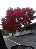Rode bomen royalty-vrije stock fotografie