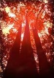 Rode Bomen stock afbeeldingen