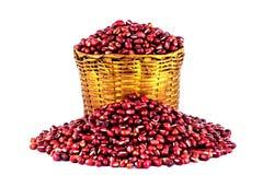 Rode Bonen Royalty-vrije Stock Afbeelding