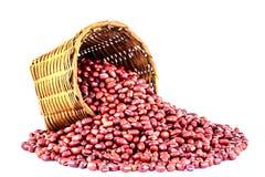 Rode Bonen Stock Afbeelding
