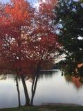 Rode boom bij Papermill-Meer Stock Afbeeldingen