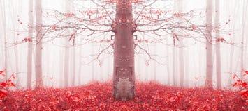 Rode boom in een mistig bos royalty-vrije stock afbeelding