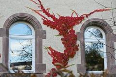 Rode boomtakken over vensters Stock Afbeelding