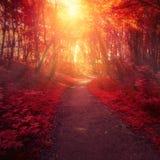 Rode bosbomen en zonlicht stock foto