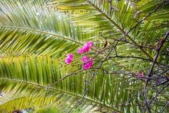 Rode Bougainvillea tegen Groene Achtergrond Royalty-vrije Stock Fotografie