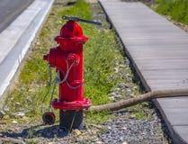 Rode brandkraan met verbonden slang royalty-vrije stock afbeelding