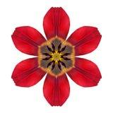 Rode Caleidoscopische Lily Flower Mandala Isolated op Wit Royalty-vrije Stock Afbeeldingen