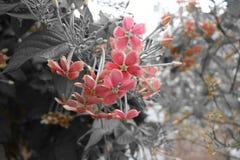 Rode Charmante Bloem stock afbeeldingen