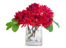 Rode dahliabloemen in vaas met rivierrotsen - wh Stock Afbeelding