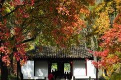 Rode de esdoorn sierbasis van Suzhoutianpingshan Stock Afbeelding
