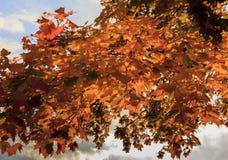 Rode de herfstbladeren met hemel en wolken op achtergronden Stock Fotografie