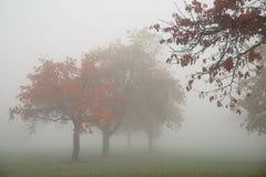 Rode de herfstbomen op een mistige dag Royalty-vrije Stock Fotografie