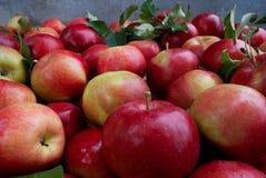 Rode de herfstoogst van de appelenclose-up royalty-vrije stock afbeelding