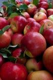 Rode de herfstoogst van de appelenclose-up royalty-vrije stock afbeeldingen