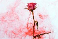 Rode de stijl de samenvatting van de waterkleur nam witte rond groene het bloed roze bladeren van de achtergrond acryl binnenwate stock fotografie