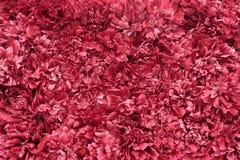 Rode de textuurachtergrond van bloembloemblaadjes Royalty-vrije Stock Afbeeldingen