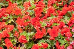 Rode decoratieve bloemen Stock Afbeeldingen