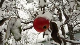 Rode die appelen in de tuin op een boom met sneeuw tegen Apple in de winter met sneeuw wordt behandeld royalty-vrije stock foto's