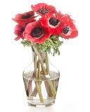 Rode die bloemen in een glasvaas op wit wordt geïsoleerd Stock Foto's
