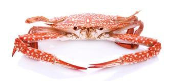 Rode die krab op witte achtergrond wordt geïsoleerd Royalty-vrije Stock Foto's