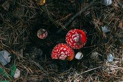 Rode die paddestoel drie in de grond wordt verborgen stock afbeeldingen